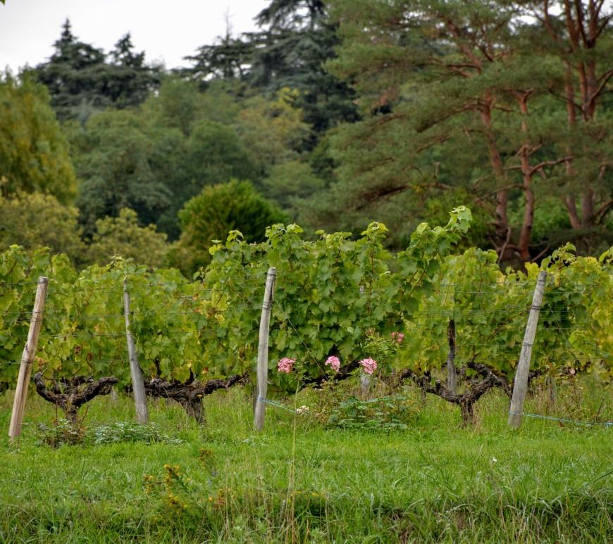 vignes de Touraine