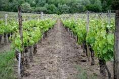vignes-reignac