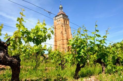 vigne-arbois